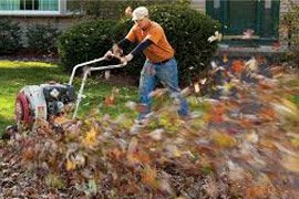 leaf-removal-pic