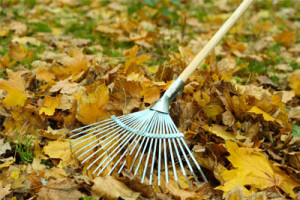 Leaves-being-raked-by-a-St.-Louis-lawn-service